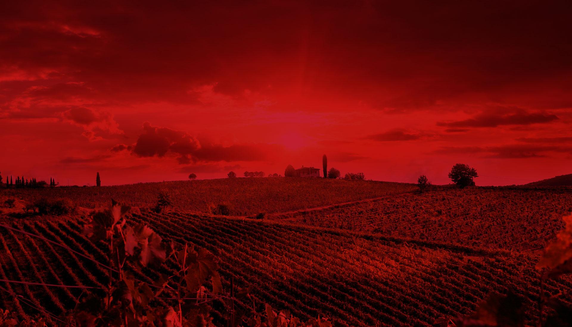 Il web lab a servizio delle aziende vinicole